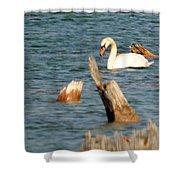 Swan Amid Stumps Shower Curtain