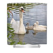 Swan And Chicks Shower Curtain