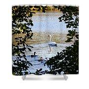 Swan And Ducks Through Trees Shower Curtain