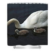 Swan And Signets Shower Curtain
