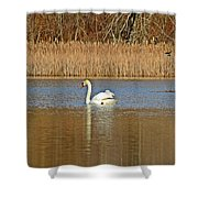 Swan And Swallow Shower Curtain