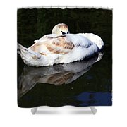 Swan Asleep Shower Curtain