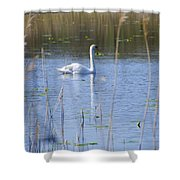 Swan At Derryallen Lough Shower Curtain