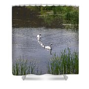 Swan Family Shower Curtain