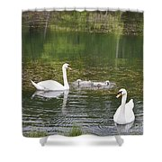 Swan Family Squared Shower Curtain