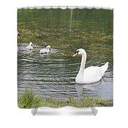 Swan Family Shower Curtain by Teresa Mucha