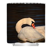 Swan Grooming Shower Curtain