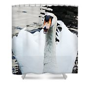 Swan Honk Honk Shower Curtain