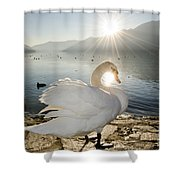 Swan In Sunset Shower Curtain