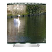 Swan In The Canal Shower Curtain