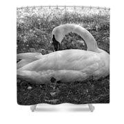 Swan Nap Shower Curtain