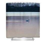 Swan On Lake At Dusk Shower Curtain