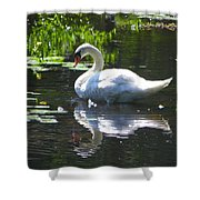 Swan On Lake Sabbatia Shower Curtain