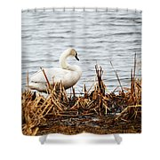 Swan On Shore Shower Curtain