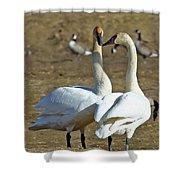 Swan Pair Shower Curtain