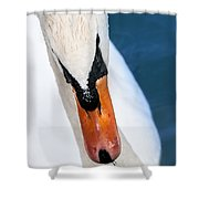 Swan Shower Curtain