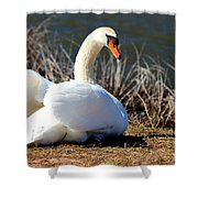 Swan Protects Her Eggs Shower Curtain