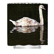 Swan Reflection Shower Curtain