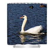 Swan Swim Shower Curtain