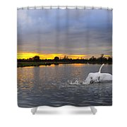 Swan Taking Off Shower Curtain