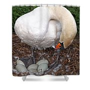 Swan Watching Over The Eggs Shower Curtain