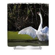 Swan Wings Spread Shower Curtain