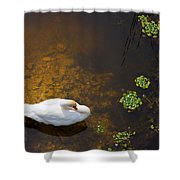 Swan With Sun Reflection On Water. Shower Curtain
