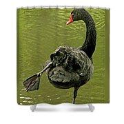 Swan Yoga Shower Curtain by Rona Black