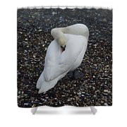 Swan1 Shower Curtain