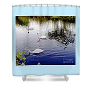 Swan's 3 In A Group. Shower Curtain