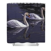Swans And Signet Shower Curtain