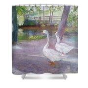 Swans At Smithville Park Shower Curtain