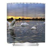 Swans At Sunset Shower Curtain