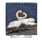 Swans Courting Shower Curtain