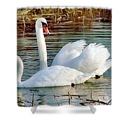 Swans Shower Curtain by Gary Heller