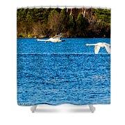Swans In Flight - Unity Park Shower Curtain