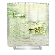 Swans In St. Pierre Shower Curtain