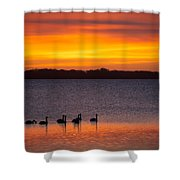 Swans In The Sunrise Shower Curtain
