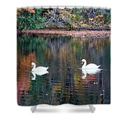 Swans At Betty Allen Shower Curtain