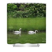 Swans Of Chatham Shower Curtain