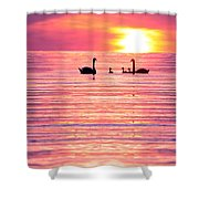Swans On The Lake Shower Curtain by Jon Neidert