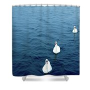 Swans On The Vltava River, Prague Shower Curtain