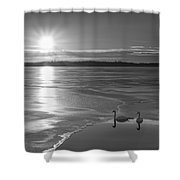 Swans Sunrise Bw Shower Curtain
