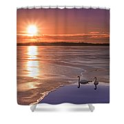 Swans Sunrise Shower Curtain