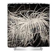 Swaying Anemone Bw Shower Curtain