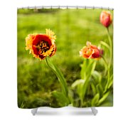 Swaying On A Breeze Shower Curtain