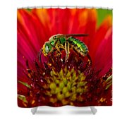 Sweat Bee Collecting Pollen Shower Curtain