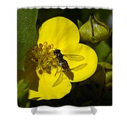 Sweat Bee Shower Curtain