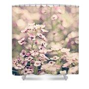 Sweet Alyssum Shower Curtain