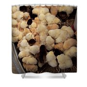 Sweet Baby Chicks For Sale Shower Curtain